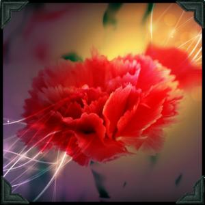 2015-05-04 Pink Carnation (2) m