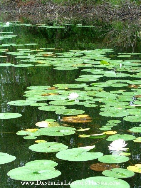 Turtle Pond, Gordon Bubolz Nature Preserve