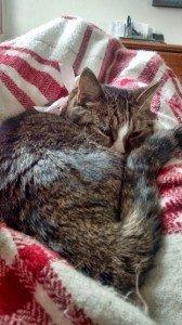 IMG_20150318_145846512_HDR Juliean Sleeping