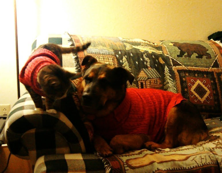 IMG_20150919_232856 Molly and Juliean in red sweaters on sofa