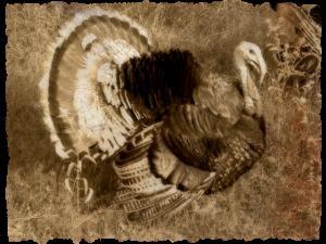 2015-11-23 turkey